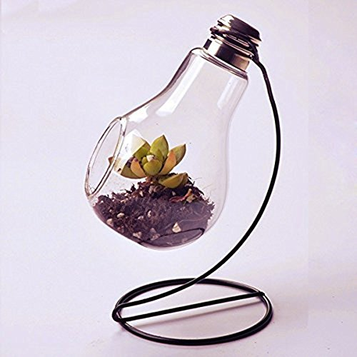 achat jungen vase en verre transparent suspendu vase air plant terrarium succulent planter. Black Bedroom Furniture Sets. Home Design Ideas