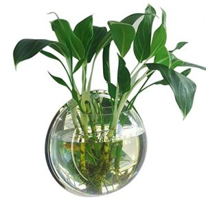 Gosear-295cm-Diamtre-Clear-Acrylique-Ronde-Wall-Mount-Poisson-Bol-Rservoir-Fleur-Plante-Vase-Dcoration-0