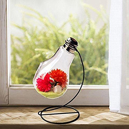 JUNGEN-Vase-en-verre-transparent-suspendu-Vase-Air-Plant-Terrarium-Succulent-Planter-Conteneur-Stand-en-mtal-0