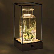 Gadgy-l-Vase-en-verre-transparant-avec-lumire-Vase-dcoratif-transparent-avec-base-en-bois-naturel-et-cadre-en-mtal-225-x-108-x-108-0-0
